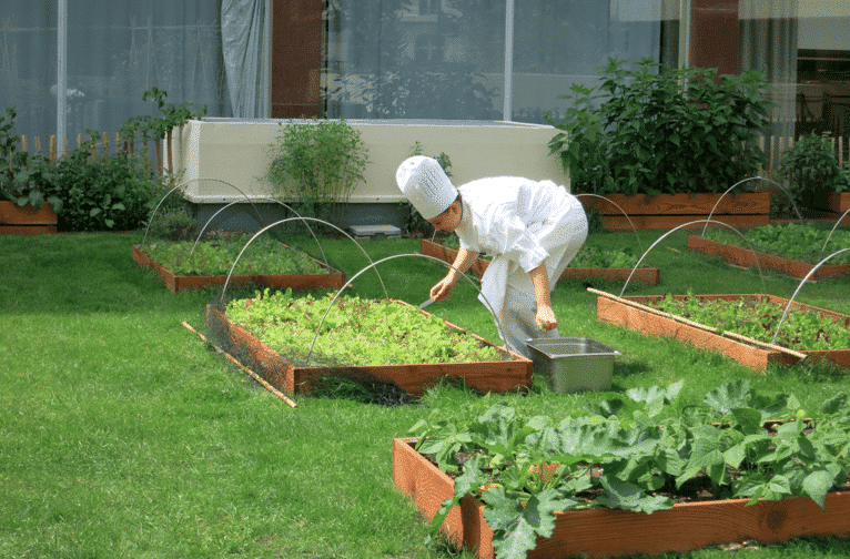 CHEF POTAGER